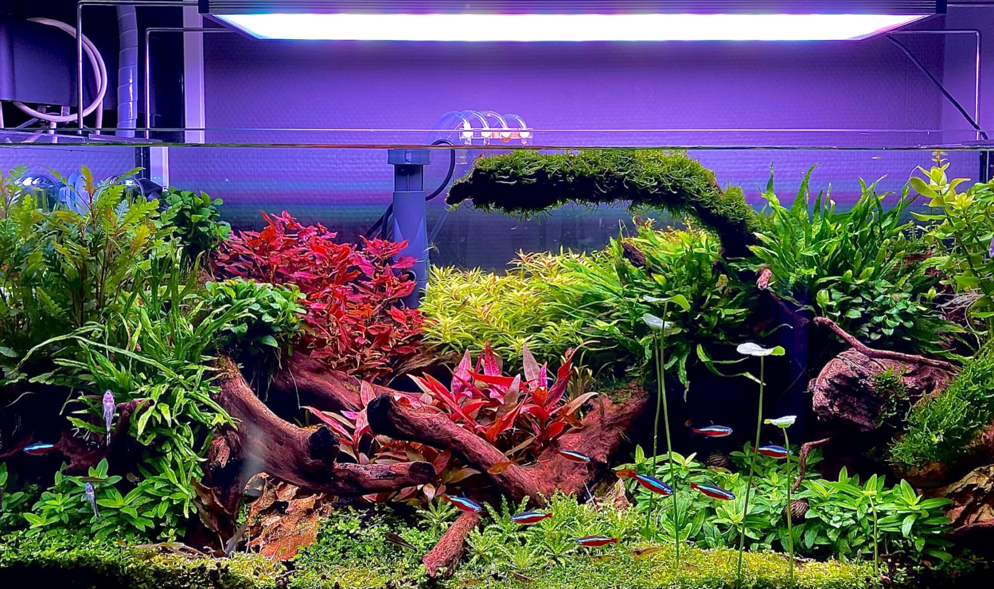 Ledverlichting aquarium