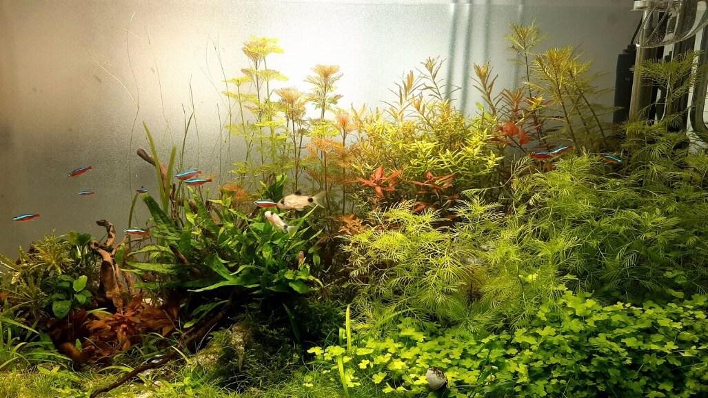soort aquarium planten