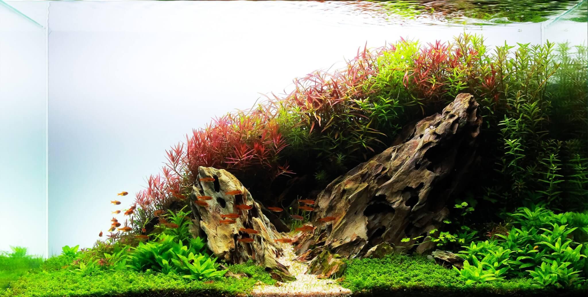 Aquascape website
