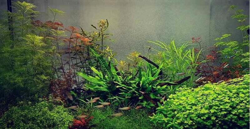 aquarium indraaien