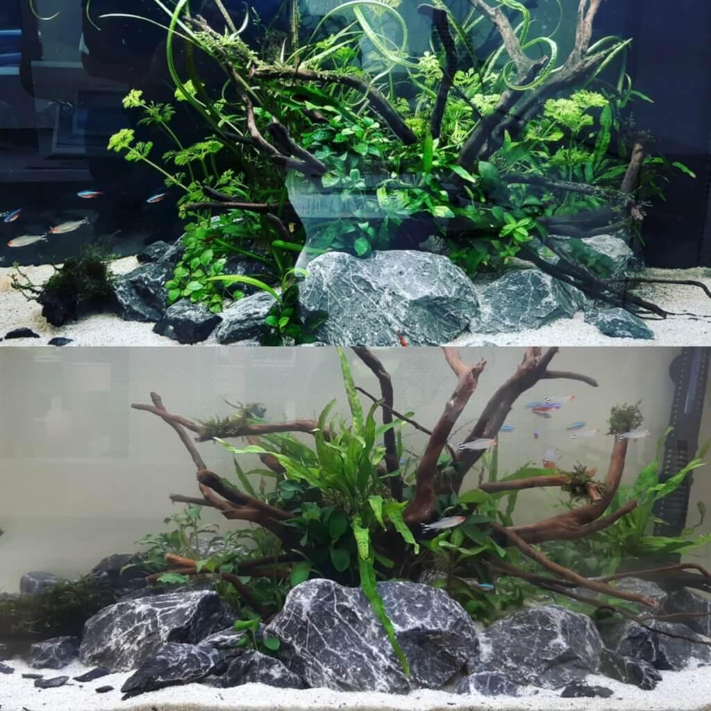 decoratie in aquarium