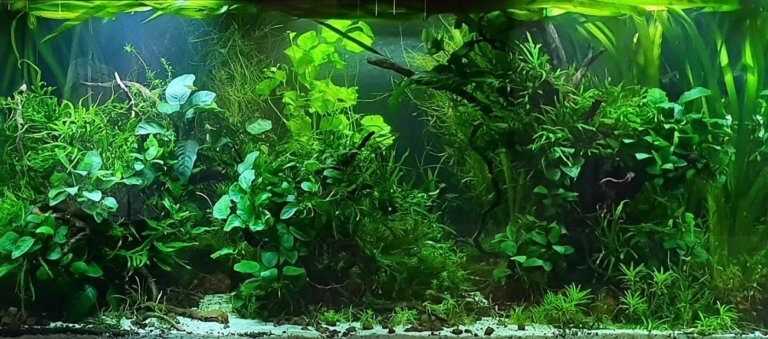 Aquascape voorbeeld