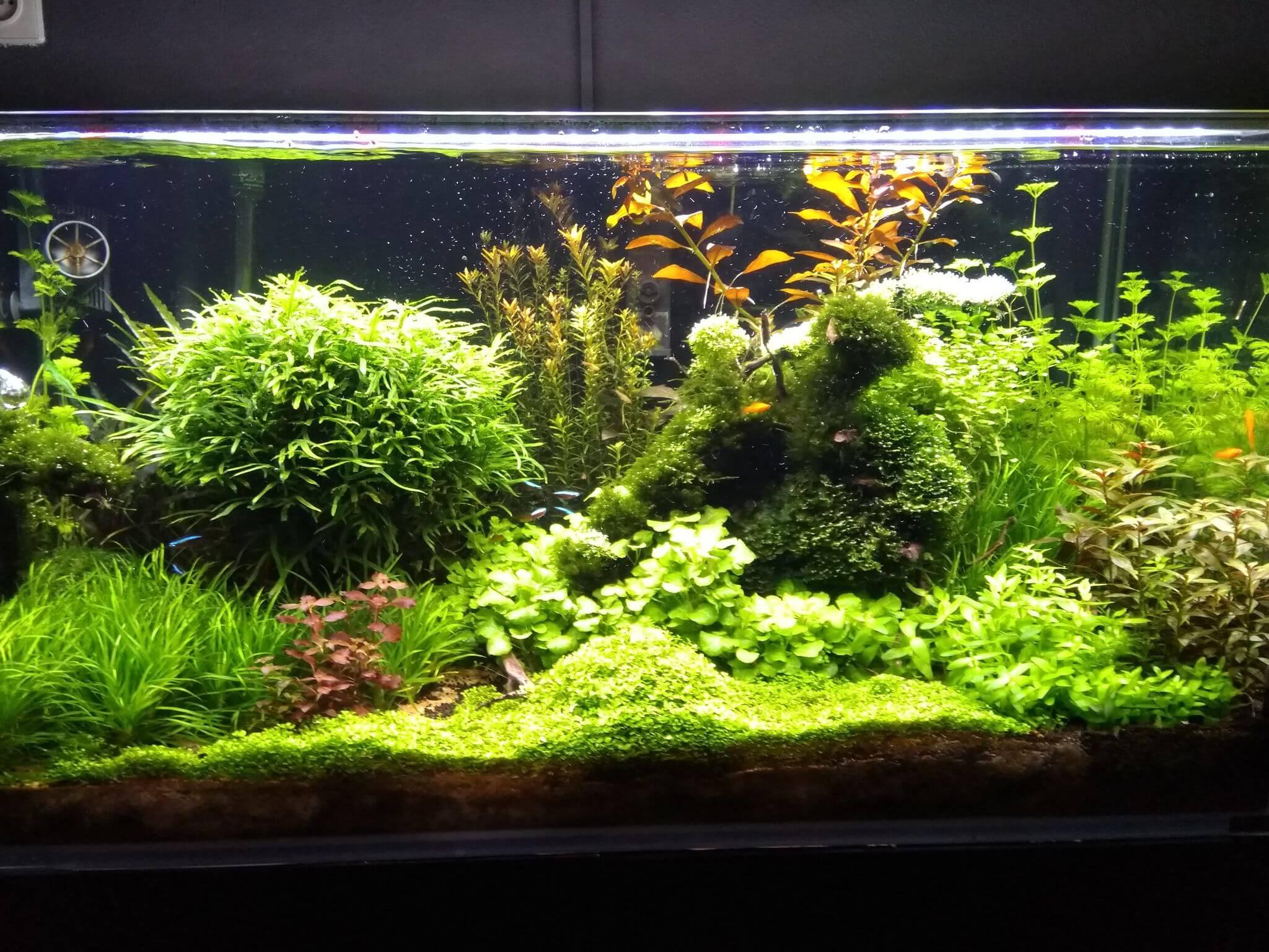beplant aquarium voorbeeld Patrick Zoutman