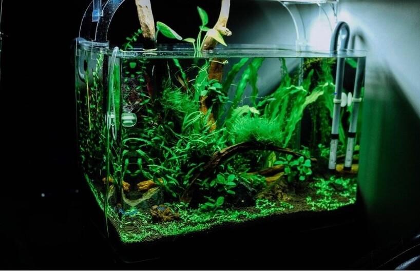 CO2 in aquariun toevoegen