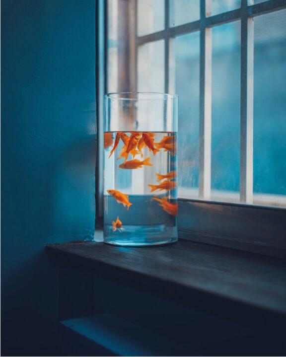 Vissenkom kopen met goudvis doe het niet!