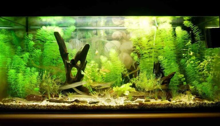 soort aquarium