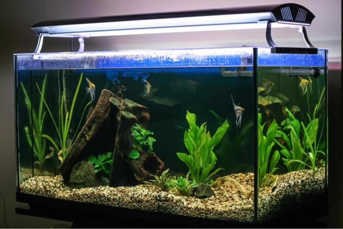 Soort aquariumverlichting kiezen