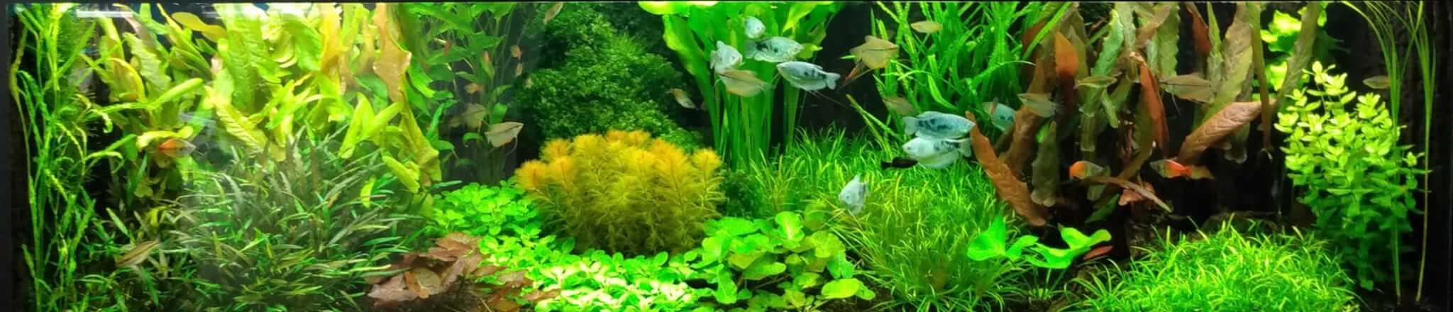aquarium voorbeeld