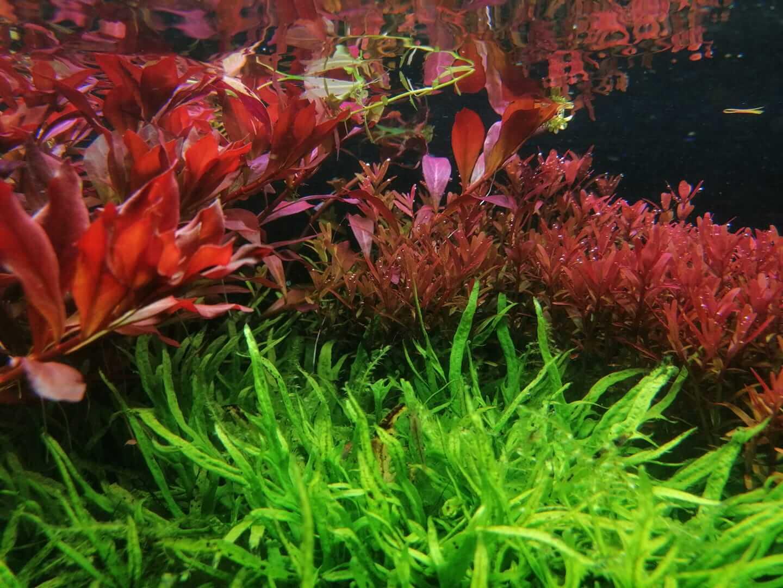 planten aquarium