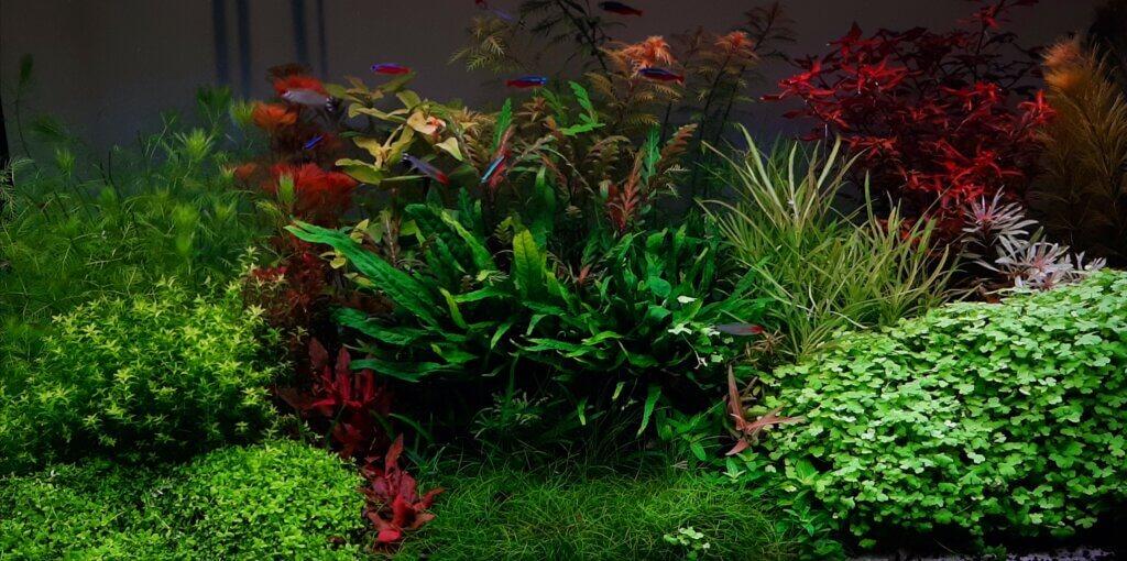 goede aquarium plantenvoeding