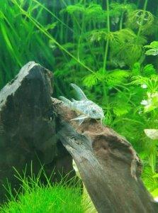 algeneters aquarium