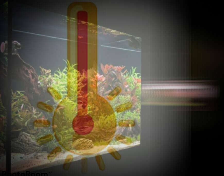 Hoe aquarium koelen