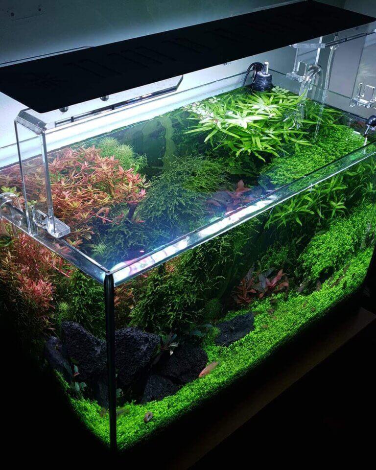 goede aquariumverlichting