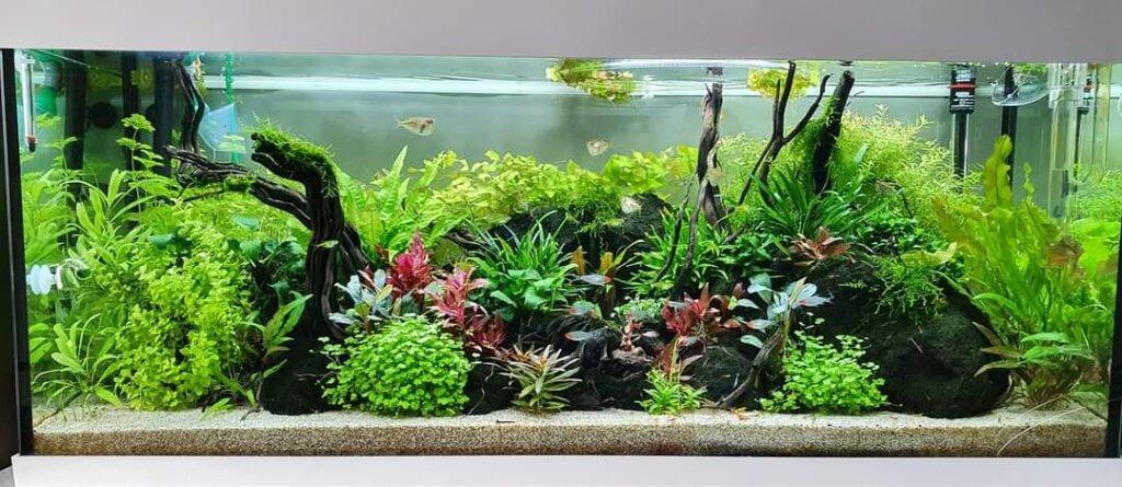 visziektes in aquarium