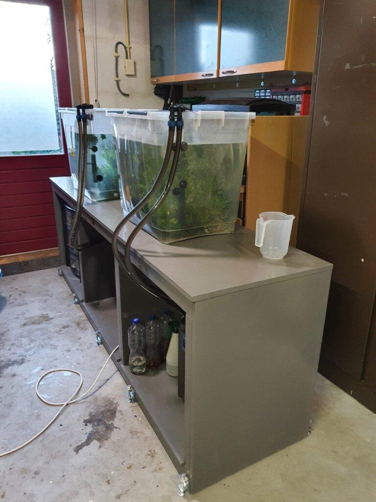 quarantaine bak aquarium