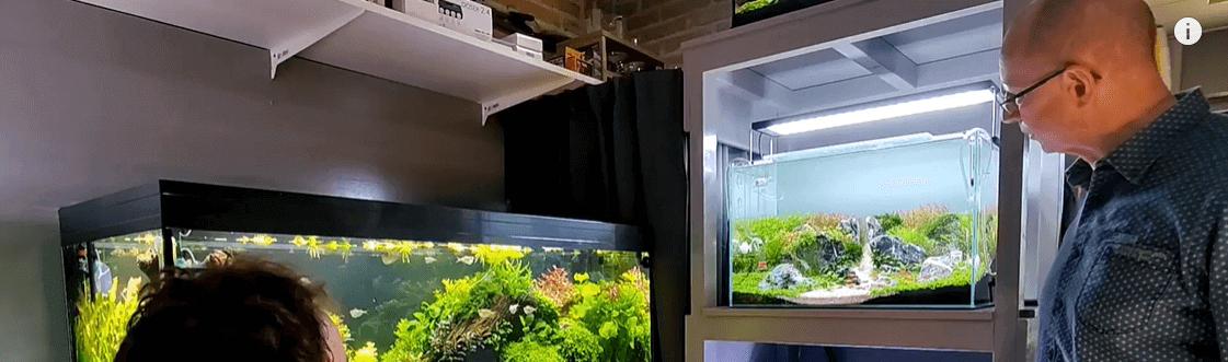 joachim en zijn aquarium voorbeelden